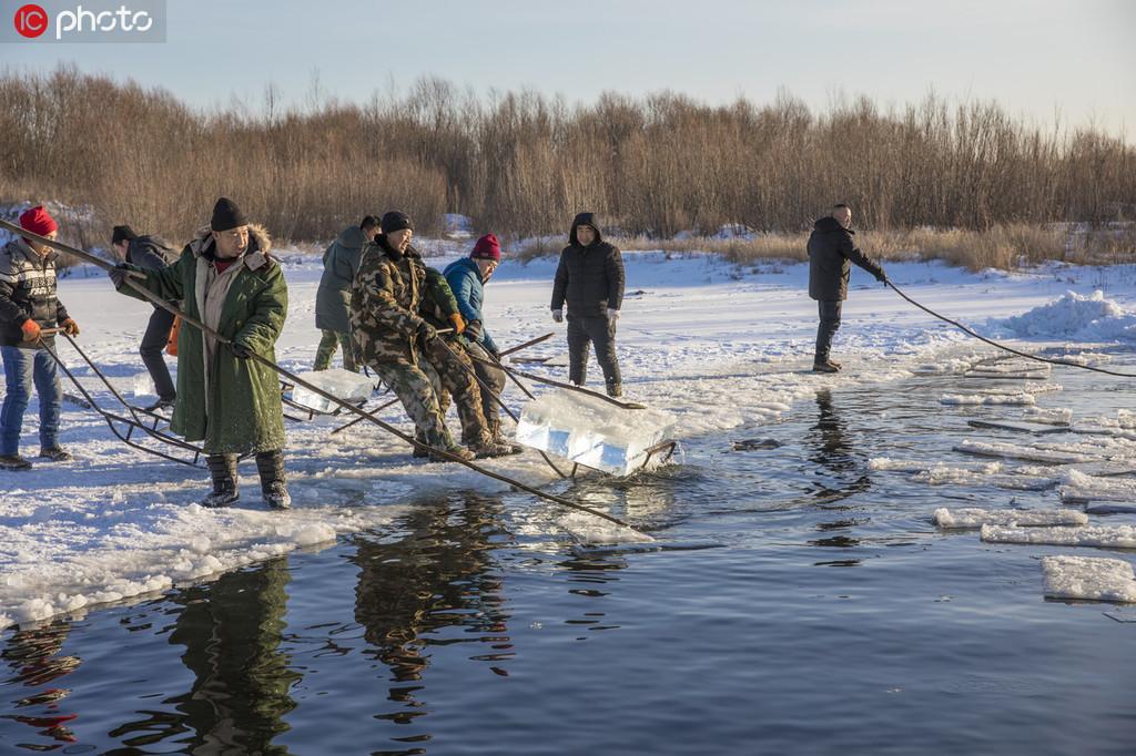 黑龙江漠河取冰现场 250人取出2500余块冰 每块重200斤