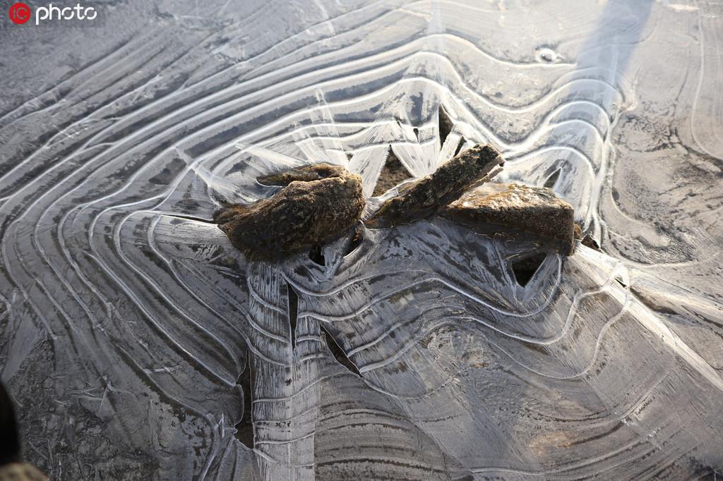青岛:海冰裹礁石 晶莹剔透图案各样