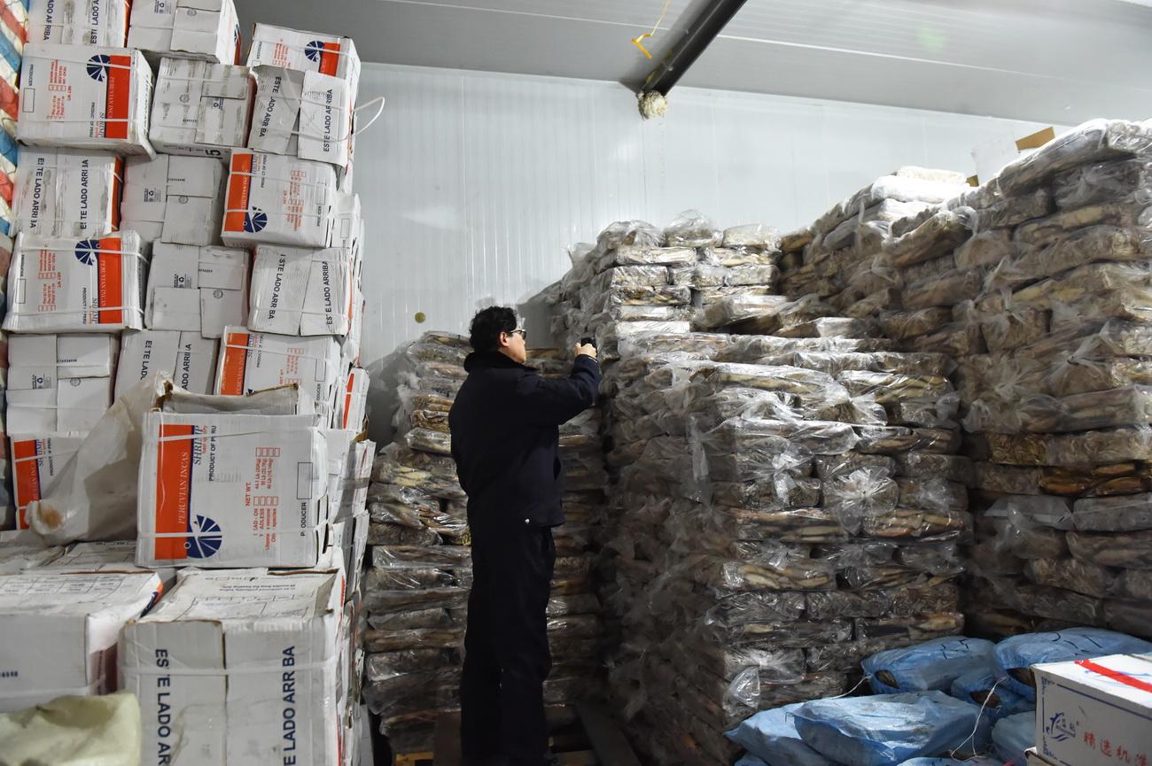 1月7日,民警在犯罪嫌疑人的仓库中查看冷冻海产品。