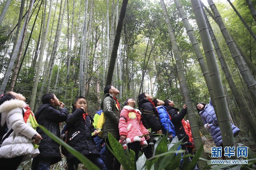 """重庆北碚:""""森林课堂"""" 亲近大自然"""