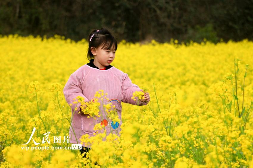 江西峡江:乡村田野春意盎然