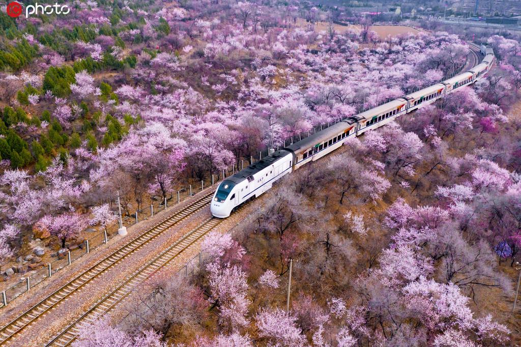 这辆开往春天的列车 穿过漫天花海,一路繁花相随!