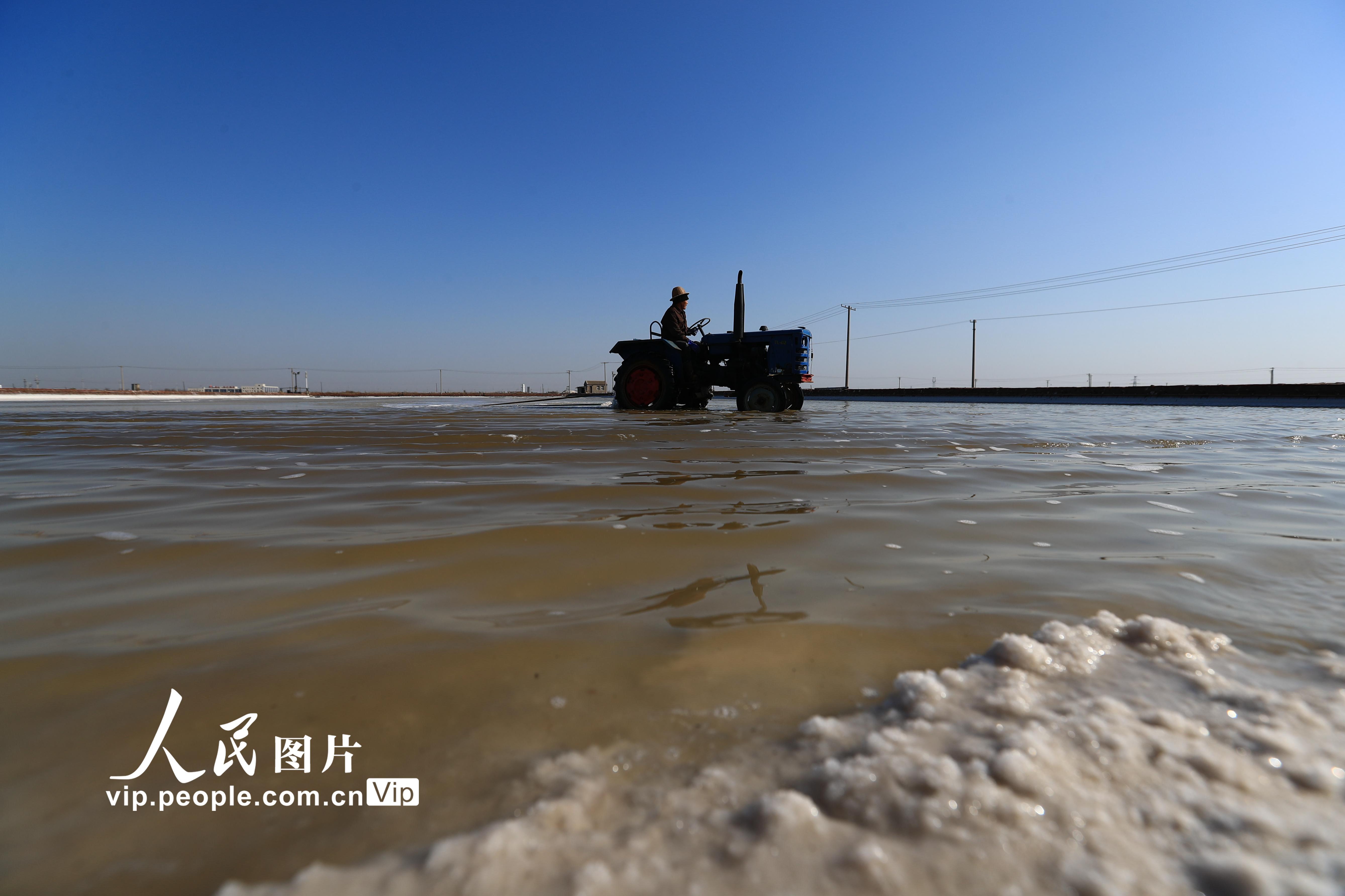"""河北唐山:天气晴好""""扒""""海盐   一片丰收景"""