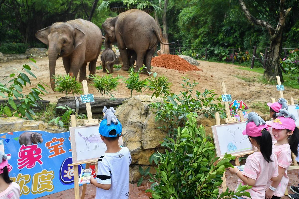 5月27日,小朋友在广州长隆野生动物世界创作亚洲象绘画。