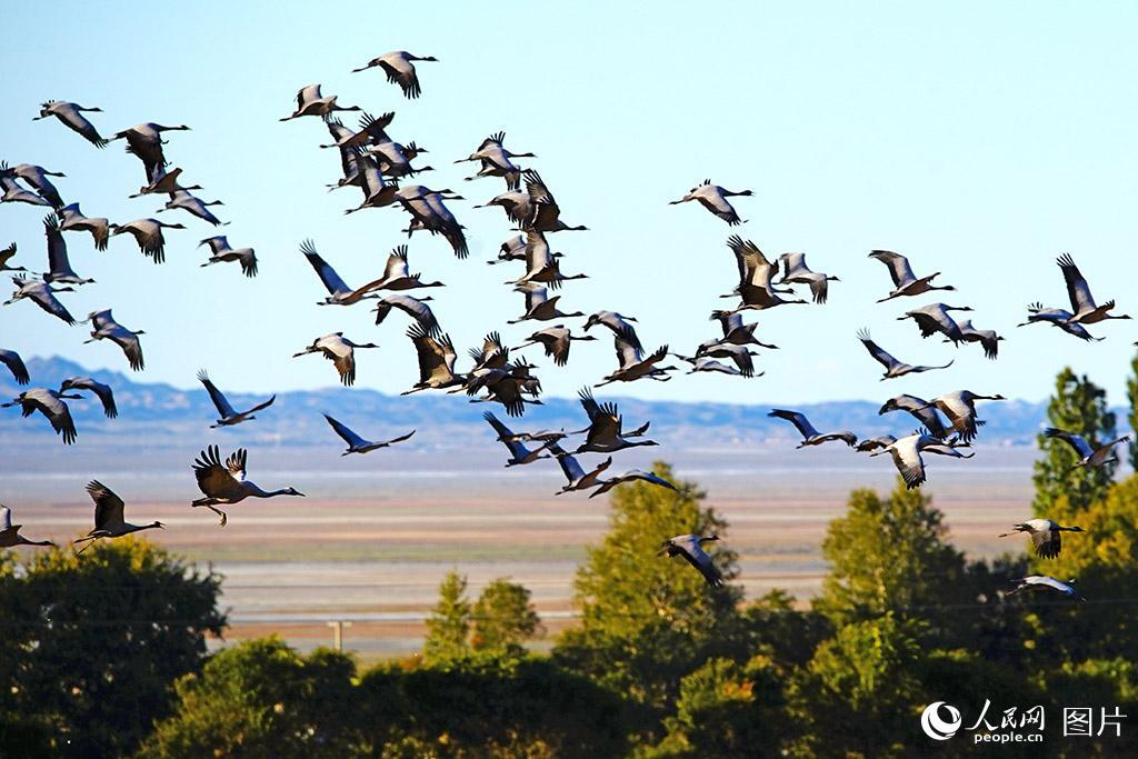 新疆巴里坤:鹤舞草原