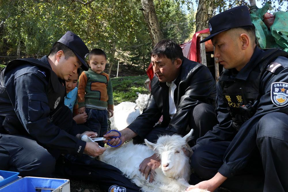 9月13日,新疆阿勒泰,民警与牧民正在为一只受伤的羊进行腿部包扎。