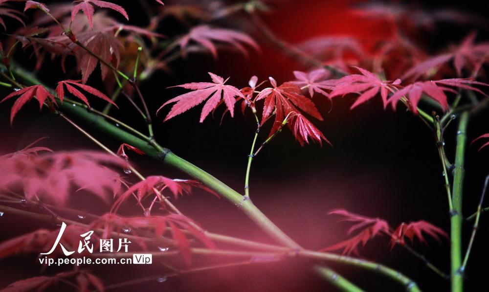 """江苏扬州:""""枫景""""醉游人【2】"""