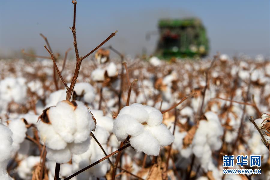 科技助力新疆棉花产业高质量发展