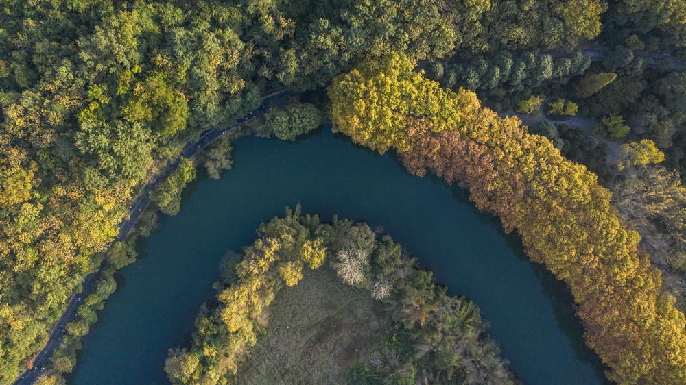 這是貴陽市花溪國家城市濕地公園黃金大道風景(10月24日攝,無人機照片)。