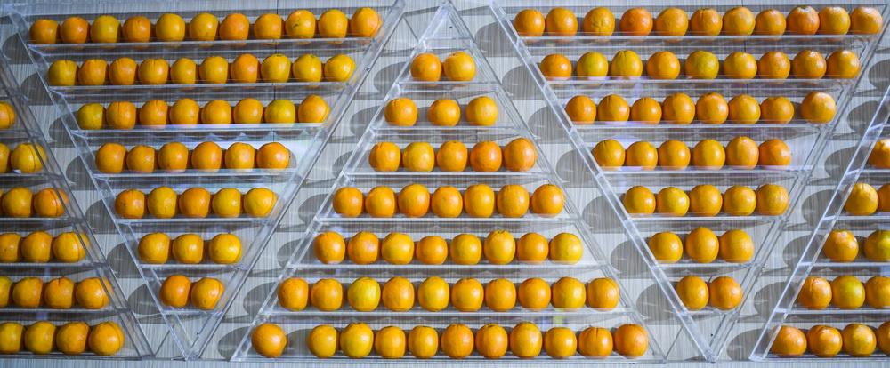 这是11月7日在进博会食品及农产品展区全球食品集成分销平台展馆拍摄的橙子。新华社记者 陈晔华 摄