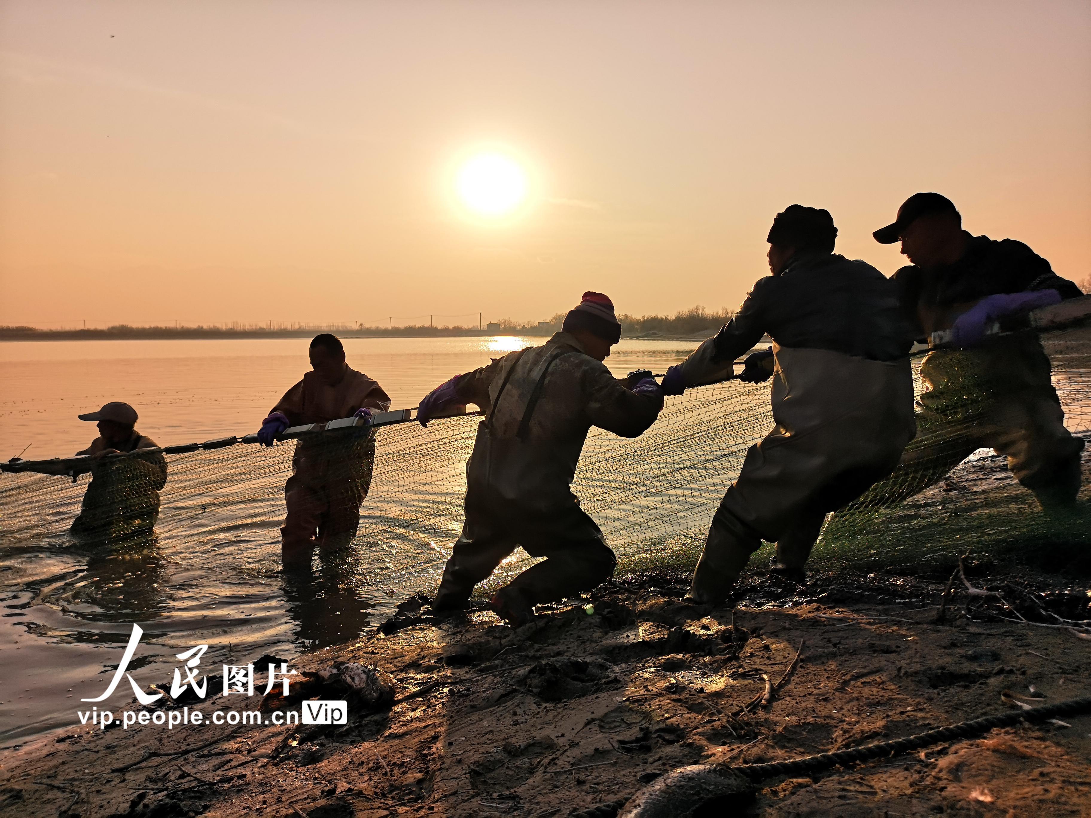 甘肃临泽:农民养鱼助力增收【4】