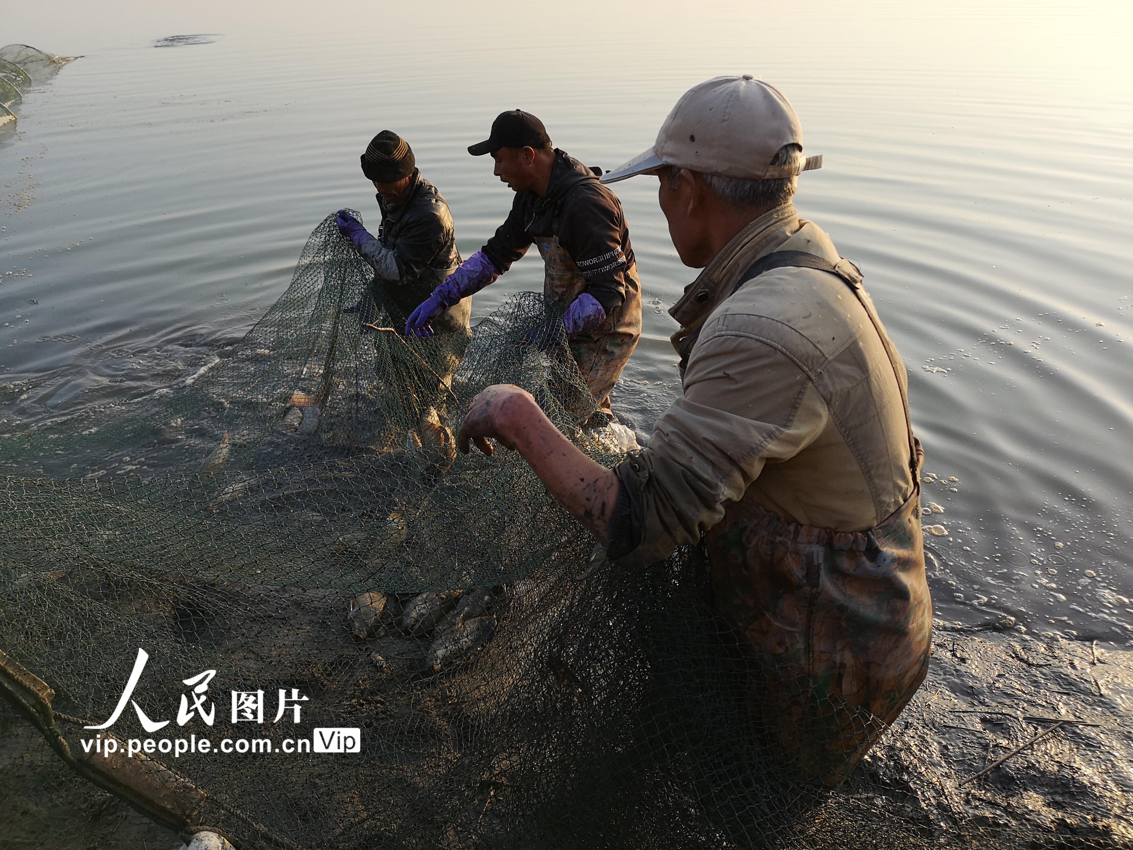 甘肃临泽:农民养鱼助力增收【5】