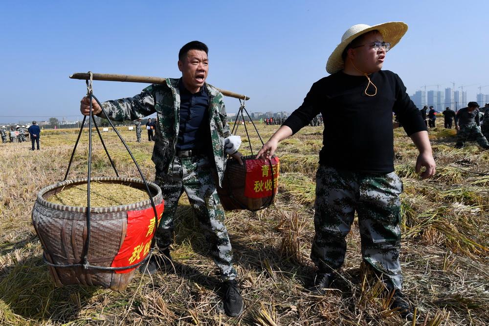 11月15日,村民在参加运稻谷比赛。