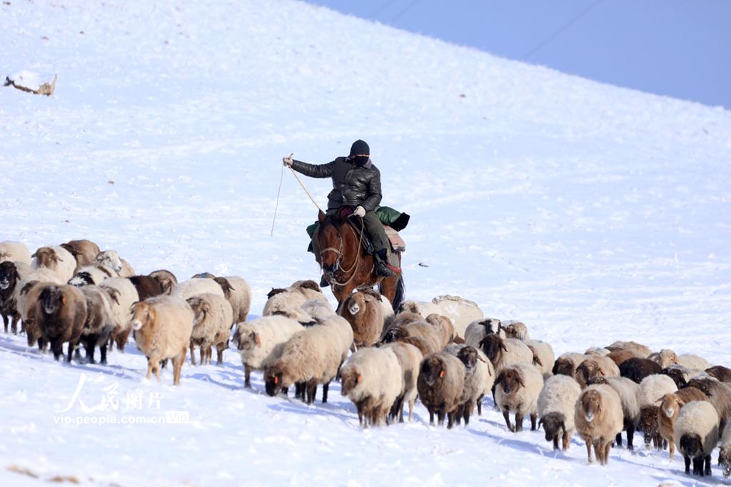 新疆温泉:牧民跨地区转场