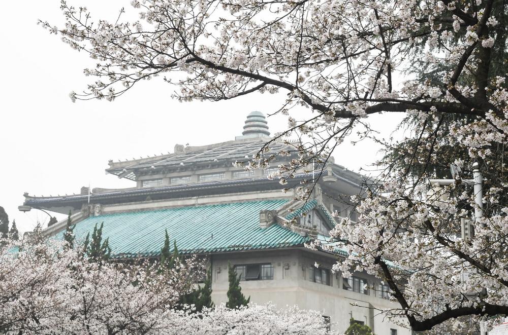 武漢大學開始接待預約游客賞櫻