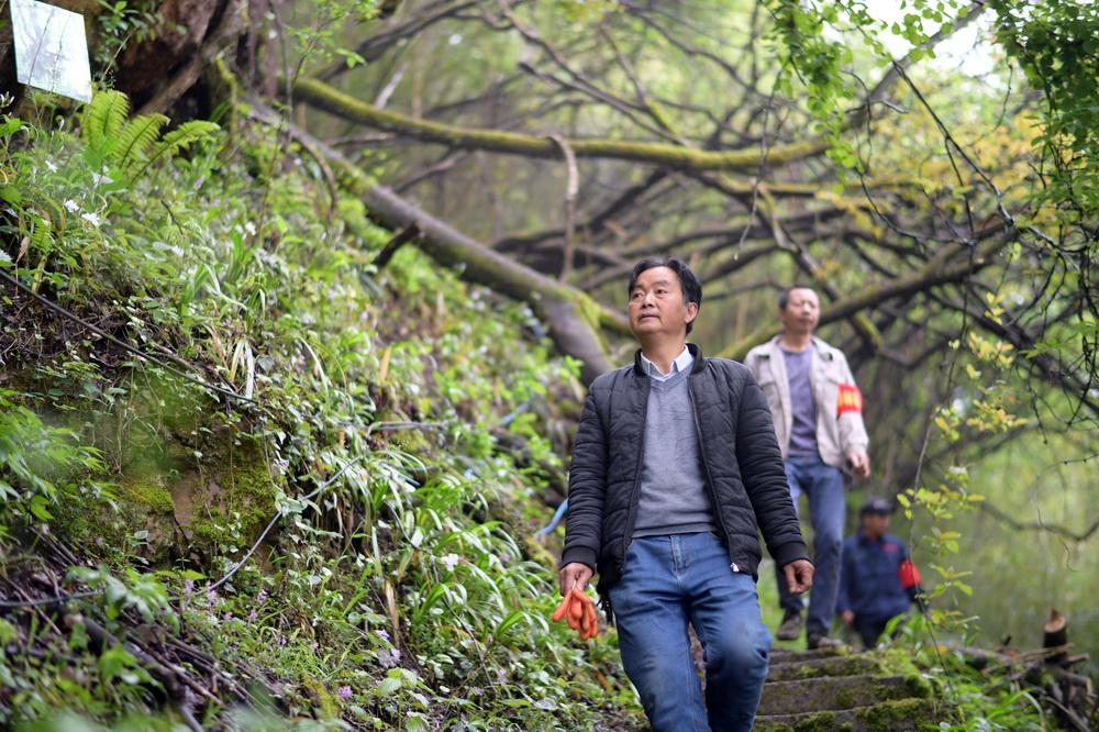 4月16日,护林员在纳雍县张家湾镇补作村珙桐花开的山林里巡查。新华社记者 杨楹 摄