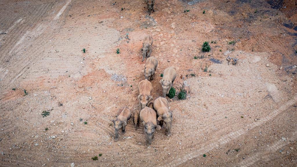5月28日在云南省玉溪市峨山县境内拍摄的象群(无人机照片)。新华社记者 胡超 摄