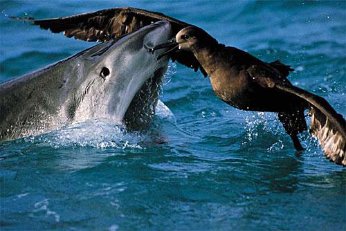 壁纸 动物 海洋动物 桌面 500_334