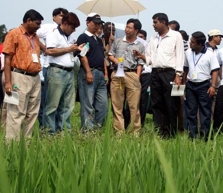 中外水稻专家在宜黄县棠阴镇大河村的制种