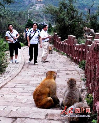 组图:河南济源五龙口风景区的猕猴家园