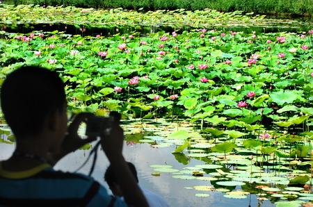 一名游客在银川中山公园荷花池边观赏