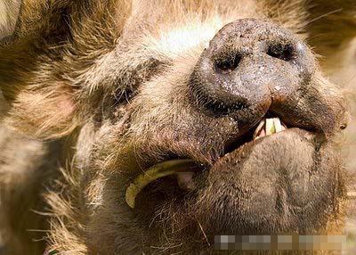 组图:世界上最丑的动物大全