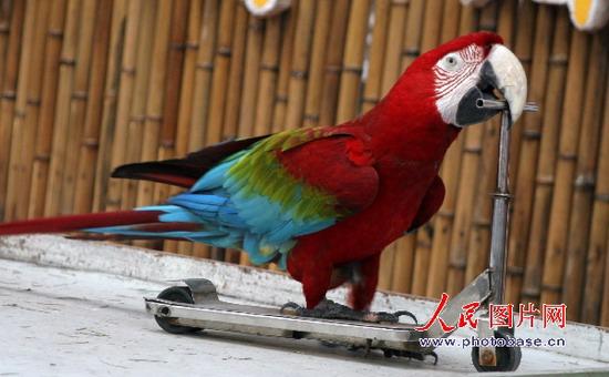 """南京红山动物园鹦鹉秀""""绝活"""""""