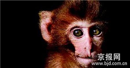动物实验的3r原则的猴子图片