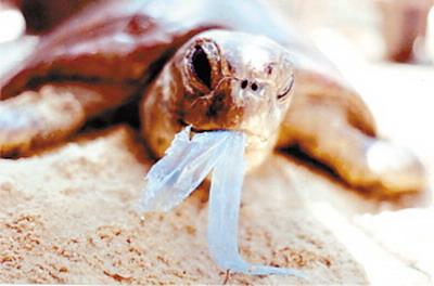 废弃的塑料袋对野生动物的生存构成威胁.