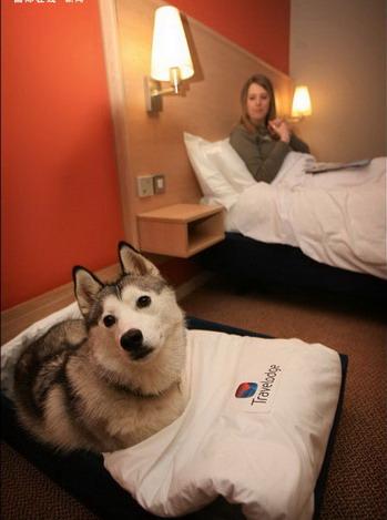 英国旅馆推出人狗共住标准间葫芦娃手游表情包图片