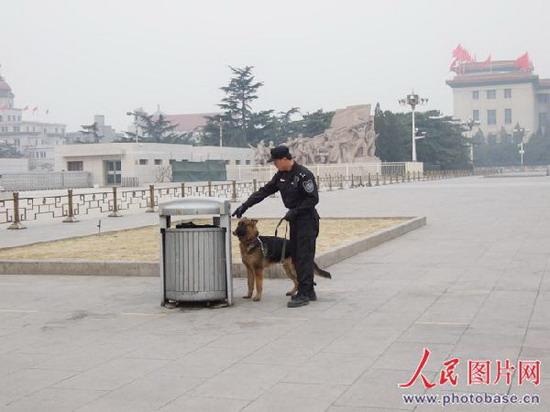 安保人员训练警犬鉴别能力. 版权作品,请勿转载.-两会上的警犬 保