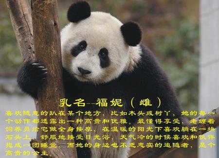 """由中国保护大熊猫研究中心和北京动物园合作开展的""""2008四川卧龙大"""