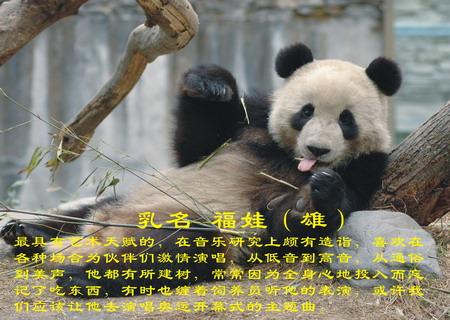 曾广泛分布于中国东部,后来同期的动物相继灭绝,大熊猫却.