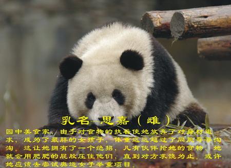 谁有关于大熊猫的资料?