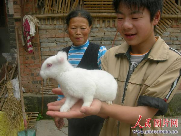 人民网讯 我家一只母獭兔生下了6只没有耳朵的仔兔,现在全部存活,每只已有一斤多重了。5月10日,四川省仪陇县大仪镇双河村六组兔农文光菊告诉笔者说。   还从来没见过兔子没有耳朵。来到文光菊家时,她家兔场正围着不少村民,使劲地盯着兔笼里的6胞胎无耳仔兔。   这6只无耳仔兔是今年3月20日由5号种兔生下的。文光菊说,产仔的5号种母兔系她2007年3月从县种兔场购回的,已生下了4窝30只仔兔,一至很正常。不知50天前产下这窝6胞胎仔兔全无耳朵,她养了4年多獭兔从来没见过这样的事,当时家人叫其扔了