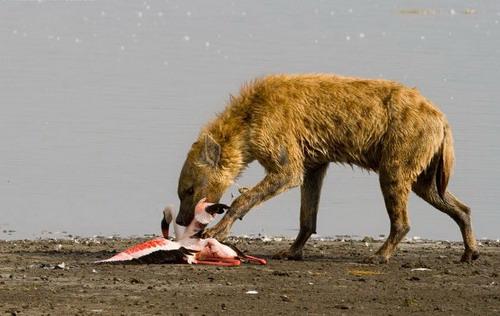 组图:凶猛动物之恶狗扑食