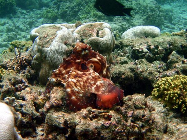 组图:有趣的马尔代夫海洋生物