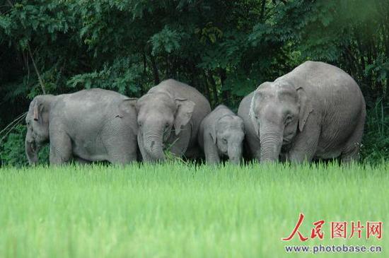 大象 动物 550_365
