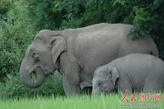 动物六头大象的图片