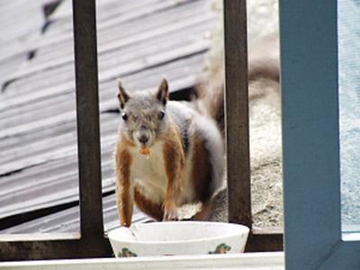 而黄鼠狼也趁机霸占了小松鼠的窝,这也引得与小松鼠和谐相处了两年多