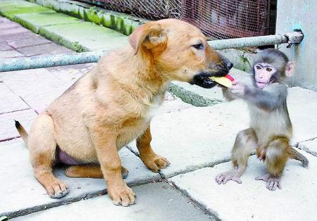 香蕉diy动物