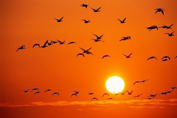 德国浅滩国家公园是3200多种动物的家园,以及众多候鸟的中途停留地