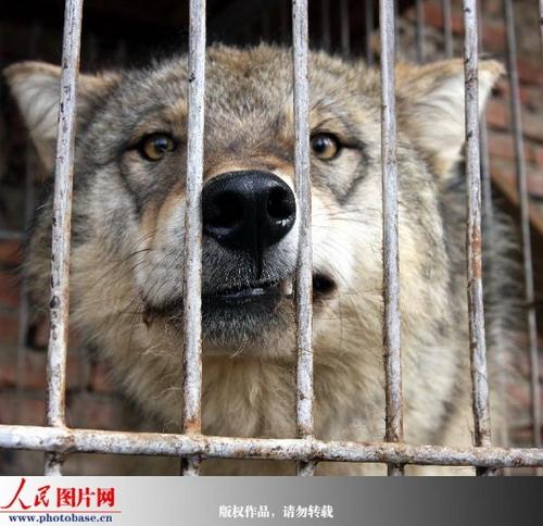 """""""国家非重点保护野生动物驯养繁殖许可证""""等合法证件"""