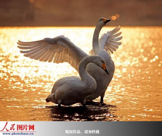 凝固瞬间的鸟语春秋(来源:人民图片网) - 黔中人(田丰) - 黔中人