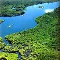 亚马逊热带雨林