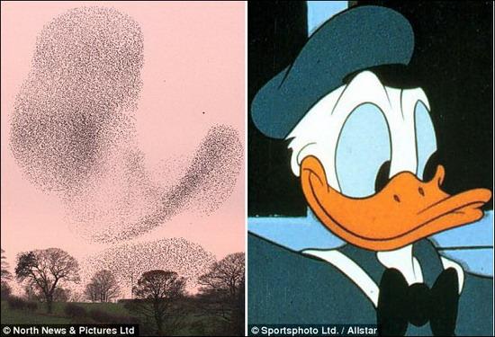 尼动画片中的唐老鸭形象