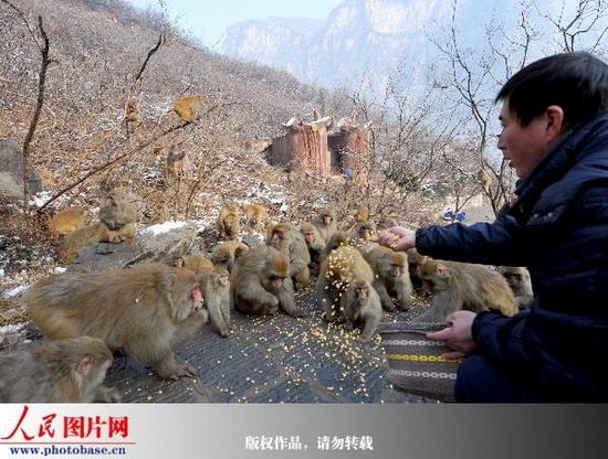 """白松岭太行猕猴自然保护区——河南省沁阳市神农山本着""""善待动物,保护"""