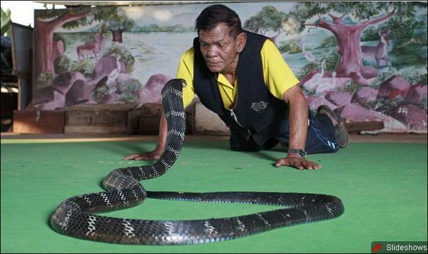 眼镜王蛇表演揽客