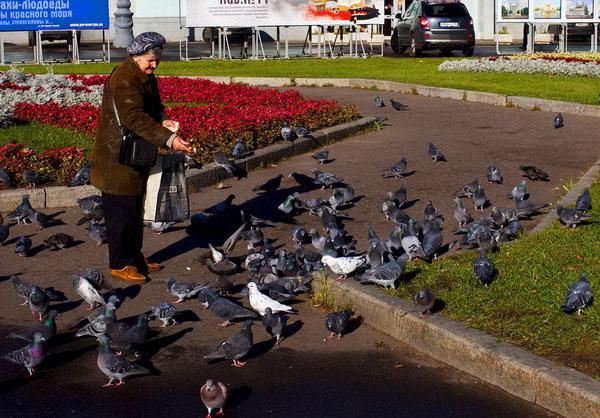 农展馆外正在喂鸽子的老人
