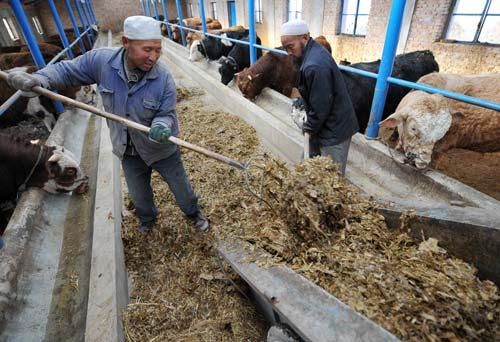 标准钢结构牛棚设计图